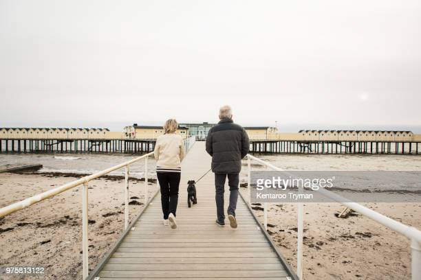 full length rear view of senior couple walking with schnauzer on boardwalk at beach against clear sky - região de oresund - fotografias e filmes do acervo
