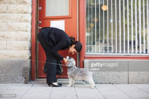 full length side view of businesswoman stroking dog outside office - beugen oder biegen stock-fotos und bilder