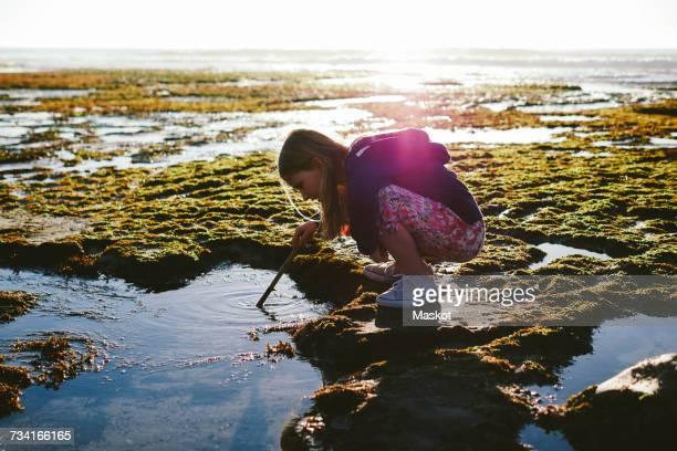 full length side view of girl dipping stick in water at beach - tidvattensbassäng bildbanksfoton och bilder