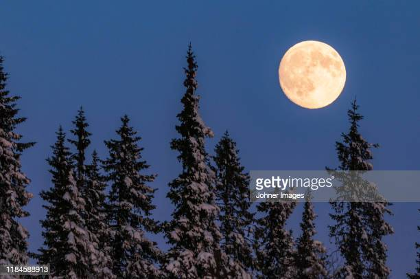 full moon above trees - snow moon stock pictures, royalty-free photos & images