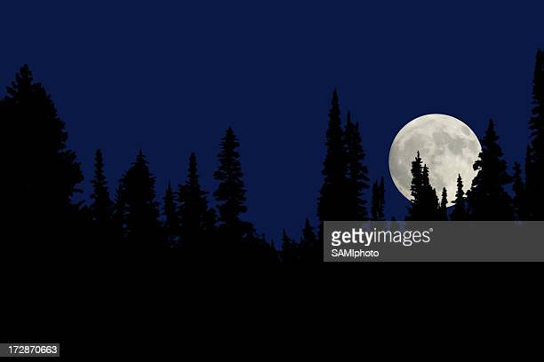 A full moon at night in the forest