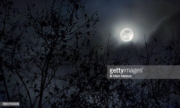 full moon behind the trees - marc mateos fotografías e imágenes de stock