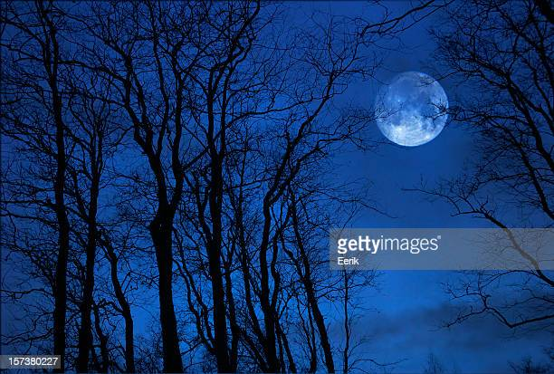 Full moon behind trees in a blue sky