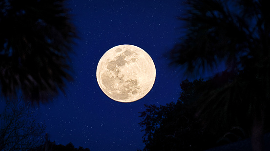 Full moon in sky with palm trees - gettyimageskorea