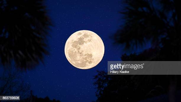 Full moon in sky with palm trees