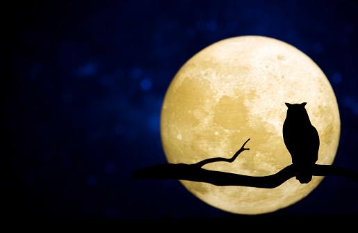 Full moon in the night sky 992856090