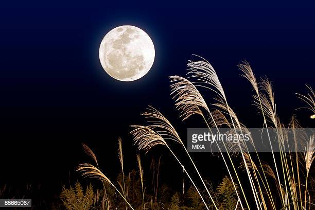 Full moon night with silver grasses