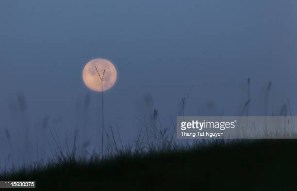 full moon on grass - flower moon stock pictures, royalty-free photos & images