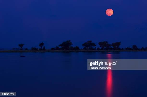 full moon over zambezi - pink moon stock pictures, royalty-free photos & images