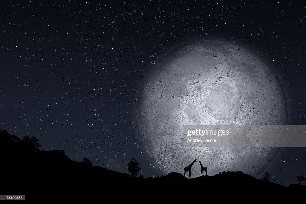 Full moon : Foto de stock