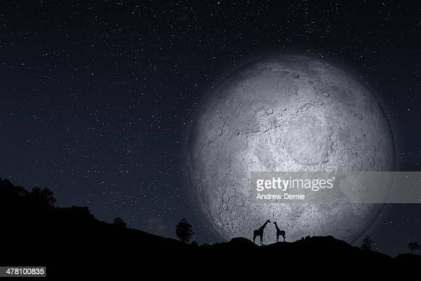full moon - andrew dernie stock pictures, royalty-free photos & images