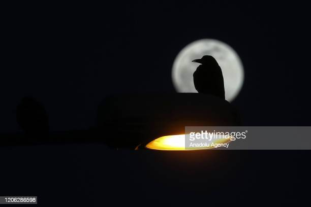 Full moon rises over a crow sits on a lamppost in Turkey's eastern Van province on March 09 2020