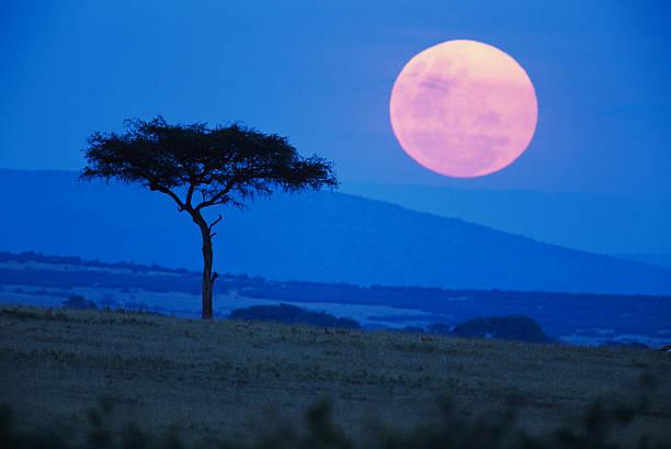 Full Moon rising above tree, savanna, Kenya
