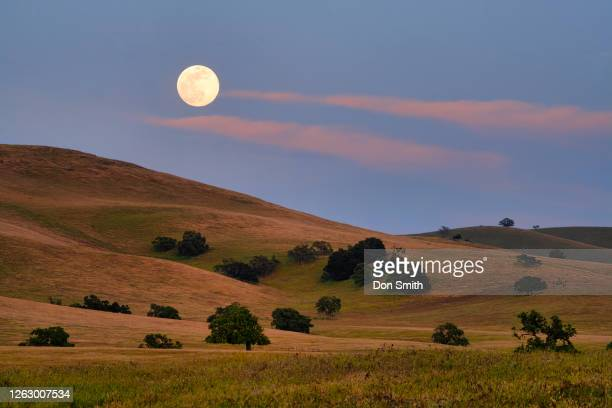 full moon rising over oaks in diablo mountain range - don smith stock pictures, royalty-free photos & images