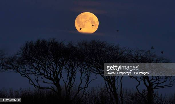 A full moon sets near Whitley Bay North Tyneside as the sun begins to rise ahead of the super snow moon on Tuesday evening