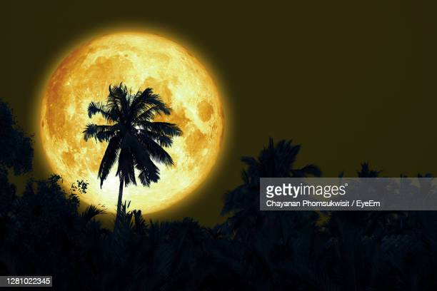 full sturgeon moon and silhouette coconut tree in the dark night sky, - flower moon stock pictures, royalty-free photos & images