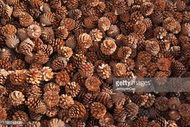 fullframe shot of pine cone background - pinecone stock pictures, royalty-free photos & images