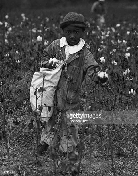 Fulllength image of a young boy picking cotton in a cotton field He wears a knit hat a denim jacket and jeans