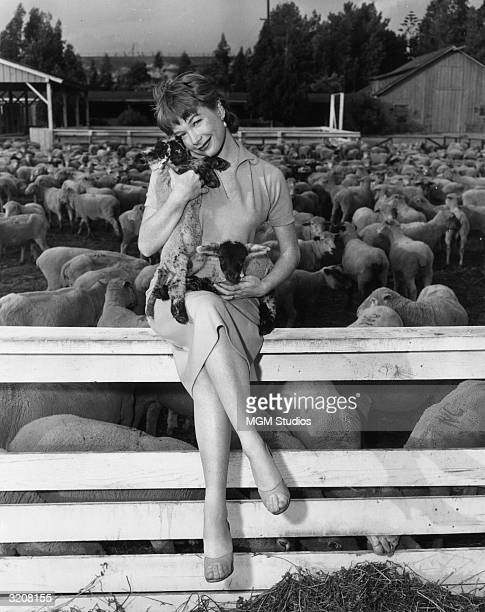 Fulllength promotional portrait of American actor Shirley MacLaine holding two lambs while sitting on a wooden fence in front of a sheep corral on...