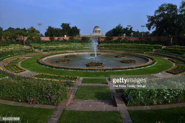 Fully bloomed Flower at the Mughal Garden at Rashtrapati Bhavan during its press preview in New Delhi
