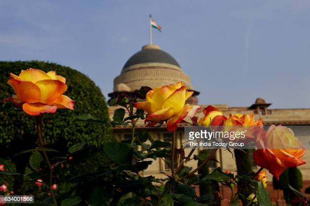 Fully bloomed Flower at the Mughal Garden at Rashtrapati Bhavan during its press preview in New Delhi.