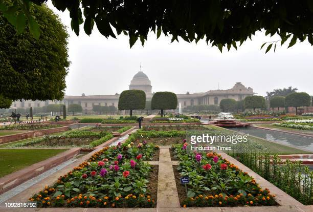 Fully bloomed flowers during the press preview of Mughal Gardens, at Rashtrapati Bhavan, on February 2, 2019 in New Delhi, India. The calming...