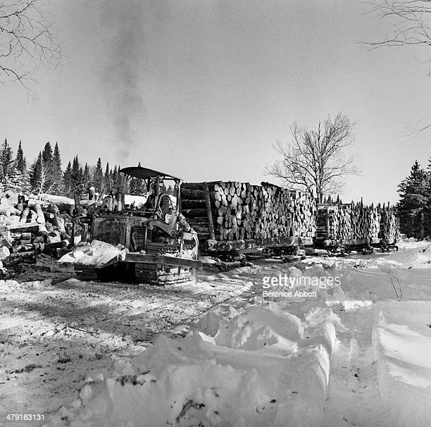 Fully loaded sledge with eight cords of wood United States circa 1950 Abbott took two series of logging photographs the first in the High Sierra...