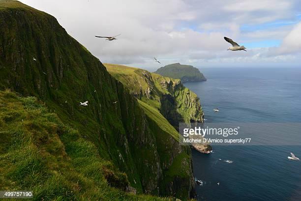 Fulmars on the cliff