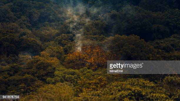 fumes in the forest, rincon de la vieja national park, costa rica nature, landscape - parco nazionale foto e immagini stock