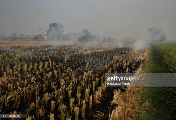 Fumes of smoke seen as farmers burn straw stubble after harvesting the paddy crops in a field, on October 14 in Karnal, India. Every year, pollution...