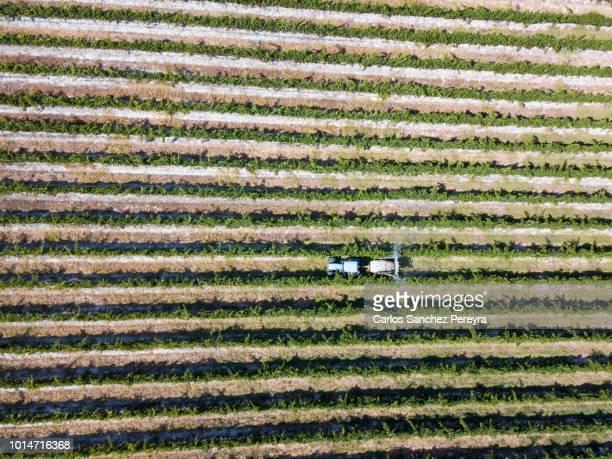 fumigated fields - wissenschaft und technik stock-fotos und bilder