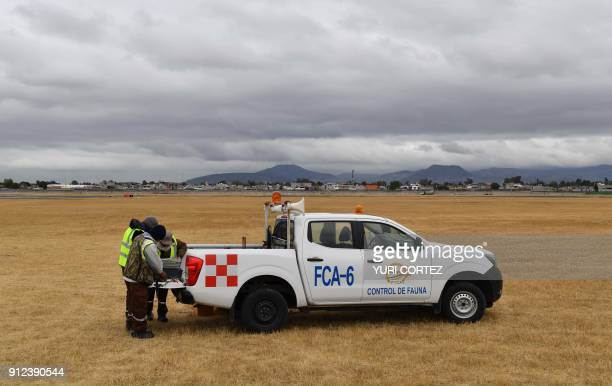 Fumigation and Avian Control company personnel prepare to release falcons and eagles to patrol around the airport takeoff and landing runways on...
