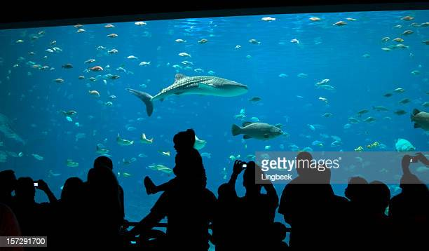 fun at the aquarium - whale shark stock pictures, royalty-free photos & images