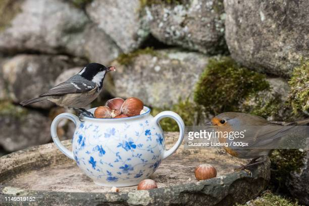 fun at the sugar bowl - susanne ludwig stock pictures, royalty-free photos & images