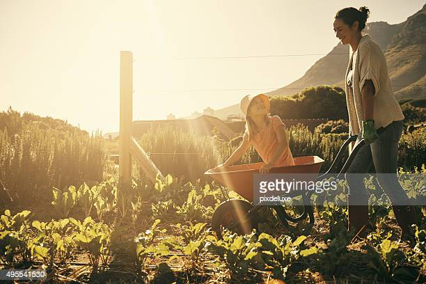 fun in the fields - wheelbarrow stock photos and pictures