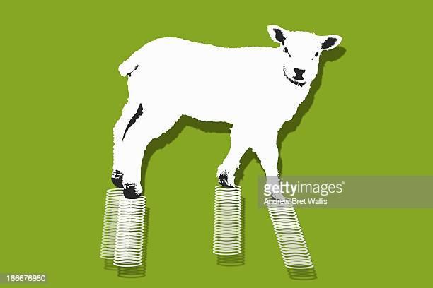 Fun take on Spring lamb