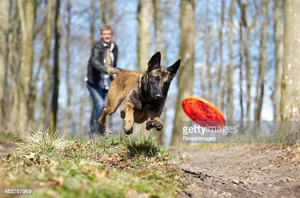 fun with my furry friend! - german shepherd stock pictures, royalty-free photos & images