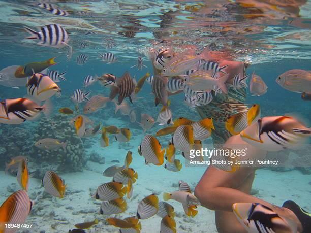 fun with tropical fish - isole cook foto e immagini stock
