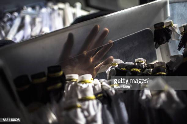 A Fundacao Oswaldo Cruz worker holds a tray of tubes filled with mosquitoes infected with the Wolbachia bacteria to be released in an attempt to...