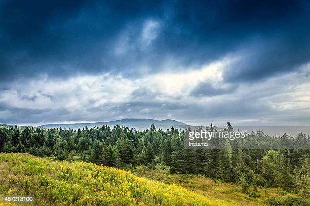fundy national park - national park stock photos and pictures