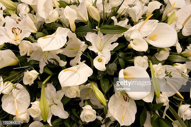 funeral flowers - white lilies - calla lilies white stock pictures, royalty-free photos & images