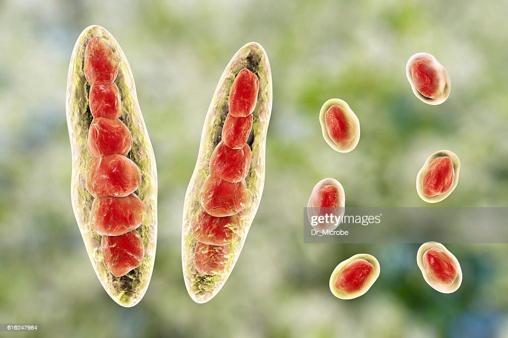 Fungi Trichophyton illustration : Foto de stock