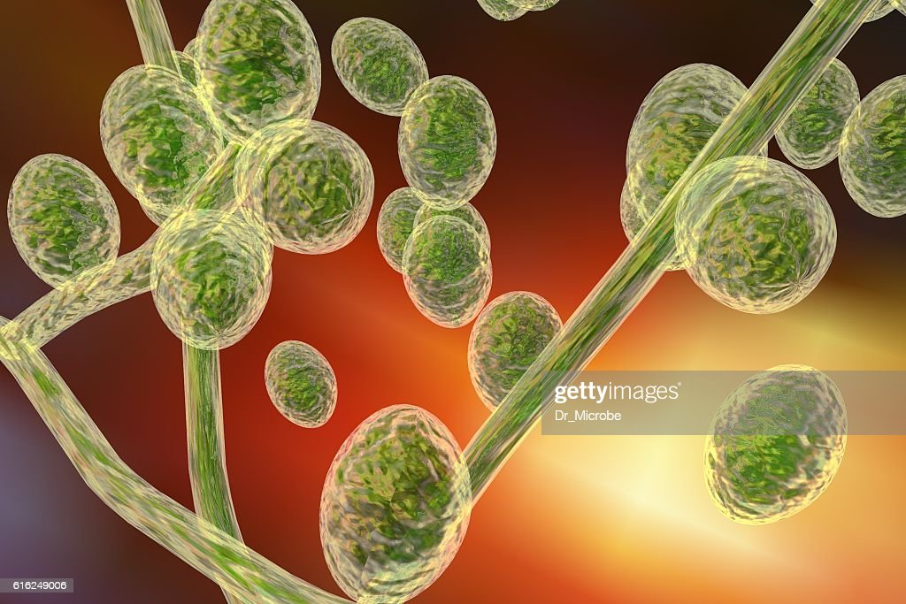 Fungi Trichophyton illustration : Foto de stock