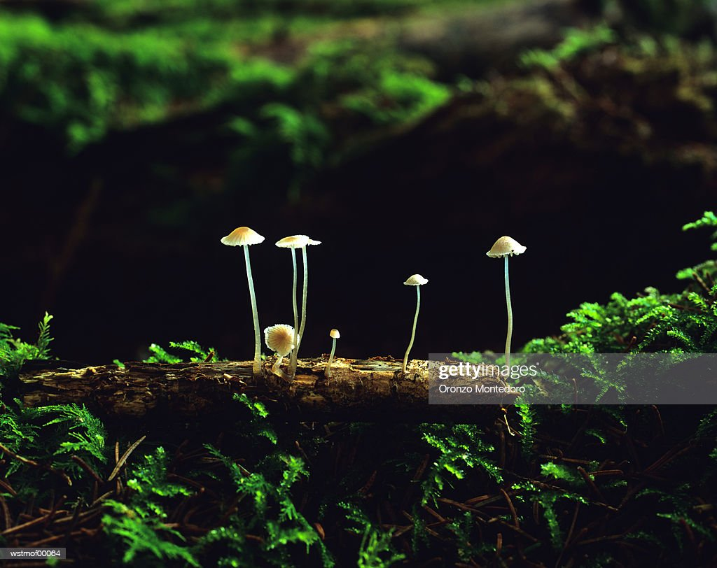 Fungus in the forest, Bavaria, Germany : Stock Photo