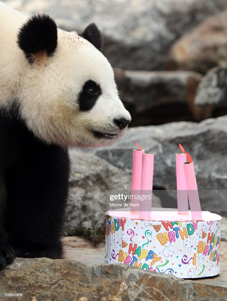 Swell Funi The Panda Inspects Her Birthday Cake To Celebrate Her First Funny Birthday Cards Online Aboleapandamsfinfo