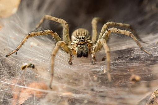 Funnel_Spider 824903686