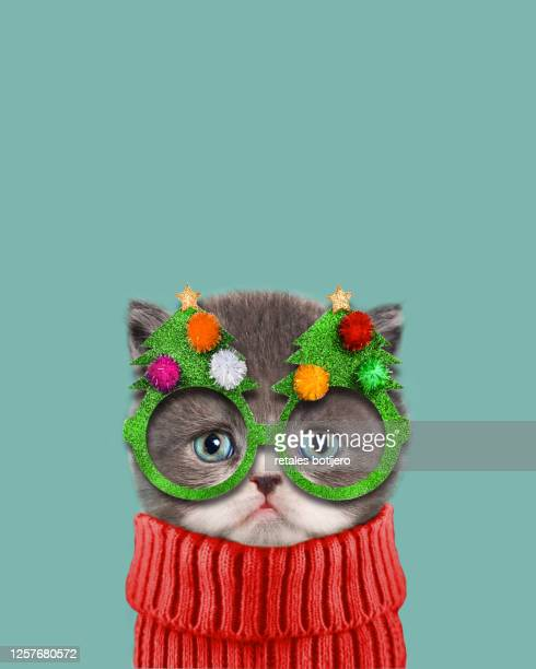 funny cat at christmas - cats stock pictures, royalty-free photos & images