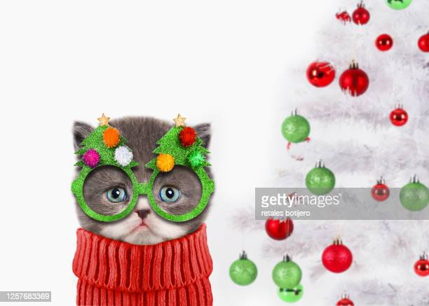 funny cat at christmas - christmas kittens stock pictures, royalty-free photos & images
