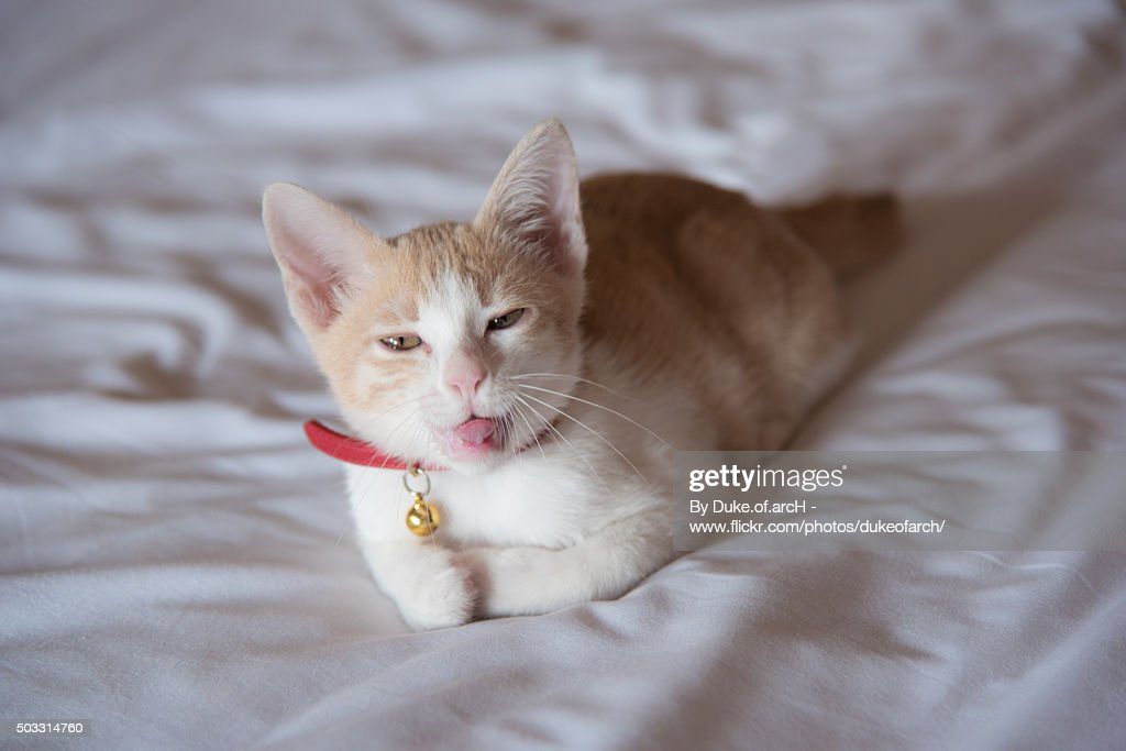 Funny cat on the bed getty images funny cat on the bed voltagebd Gallery