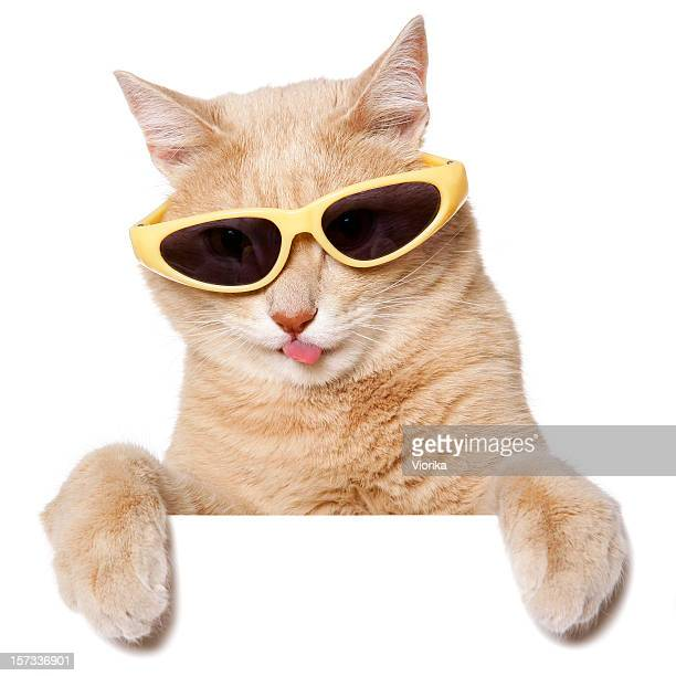 Funny Cat (Blank sign on white)